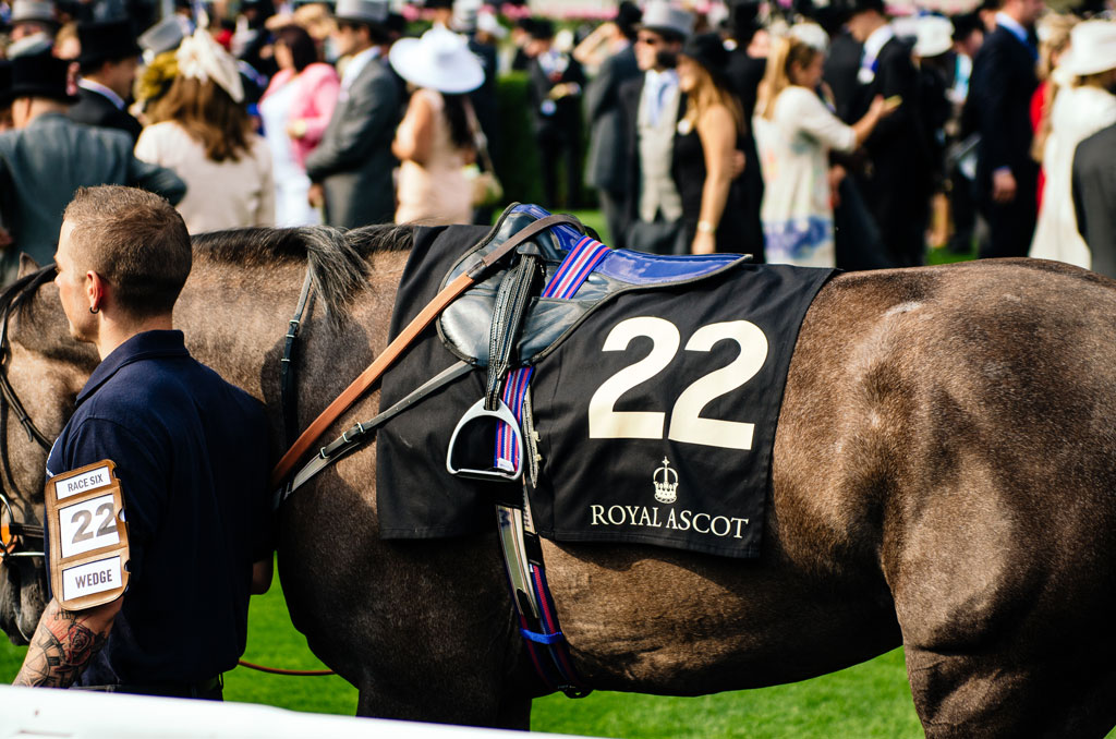 ascot-horse
